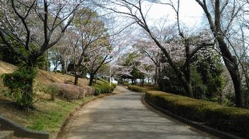 公園の桜0406-6.jpg